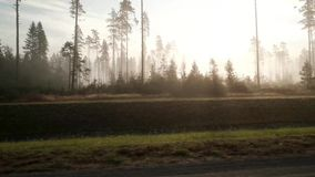 森林公路与雾的早晨 股票视频