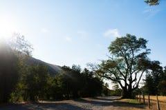 森林公路和日出 免版税库存图片