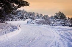 森林公路在冬天 免版税库存图片