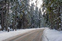 森林公路在冬天 库存图片