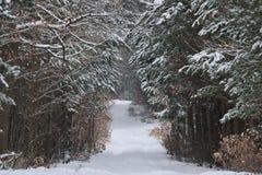 森林公路在冬天 免版税库存照片