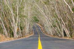森林公路在夏天在泰国 免版税库存照片