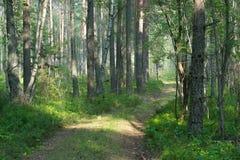 森林公路在夏天森林里 免版税库存图片