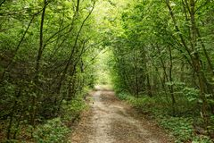 森林公路在小叶茂盛树树荫下  图库摄影