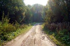 森林公路在晴朗的秋天天 免版税库存照片