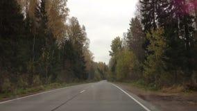 森林公路在秋天 股票录像