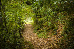 森林公路在秋天 免版税库存图片
