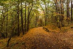 森林公路在秋天 库存照片