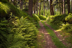 森林公路在阳光下 库存图片