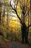 森林公路在黎明 库存图片