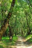 森林公路夏天 库存照片