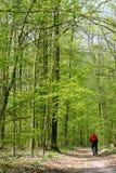 森林公路夏天 免版税库存图片