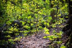 森林公路方式 图库摄影