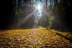 森林公路被盖黄色叶子 免版税图库摄影