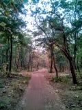 森林公路视图 库存照片