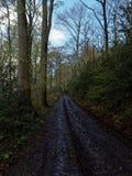 森林公路通过森林 免版税库存照片
