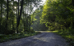 森林公路,克罗地亚 免版税图库摄影