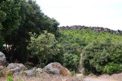 森林公路 库存照片