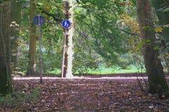 森林公路amsterdamse森林 库存照片