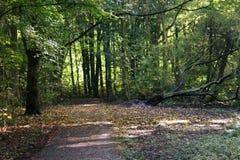 森林公路amsterdamse森林 图库摄影