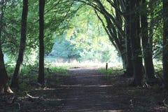 森林公路amsterdamse森林 免版税库存照片