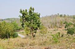 森林六 免版税库存照片