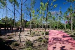 森林内存 免版税库存图片