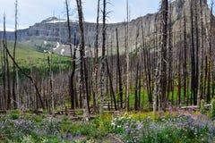 森林再生 免版税库存图片