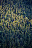 森林冠上结构树 免版税库存照片
