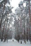 森林冬天妇女 免版税库存照片