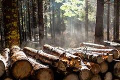 森林冬天或秋天 免版税图库摄影