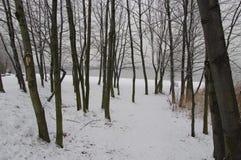 森林冬天视图  免版税图库摄影