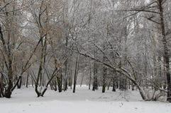 森林冬天视图  免版税库存照片