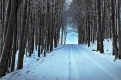 森林冬天隧道 库存图片