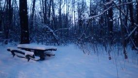 森林冬天雪 免版税库存照片