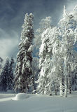 森林冬天 库存照片
