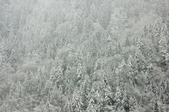 森林冬天 库存图片
