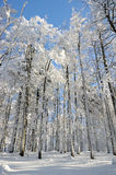 森林冬天 图库摄影