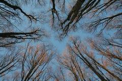 森林冬天 免版税库存照片