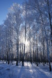 森林冬天 免版税库存图片