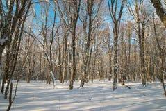 森林冰冷的冬天 库存图片