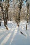 森林冰冷的冬天 免版税图库摄影