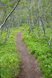 森林冰岛 免版税图库摄影
