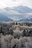 森林冻结的山 免版税库存照片