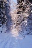 森林冻结的结构树冬天 免版税图库摄影