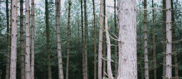 森林出血到黑暗里 免版税图库摄影