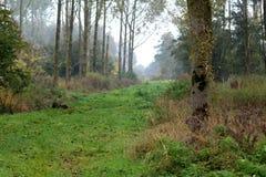森林初排 免版税库存照片
