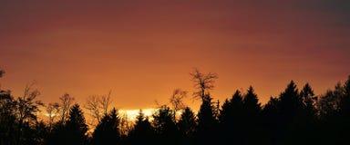 森林剪影 库存照片