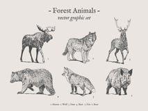 森林动物葡萄酒例证集合 免版税图库摄影