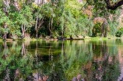 森林包围的镜子湖的风景 免版税库存照片